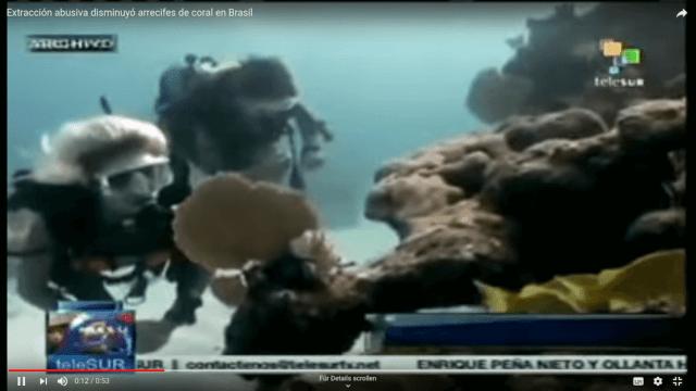 Korallen vor Brasilien verschwinden